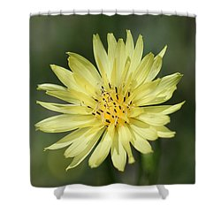 Shower Curtain featuring the photograph Dandelion by Ester  Rogers