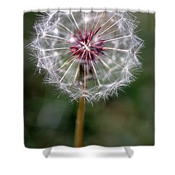 Shower Curtain featuring the photograph Dandelion Seed Head by Henrik Lehnerer