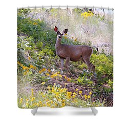 Shower Curtain featuring the photograph Deer In Wildflowers by Athena Mckinzie