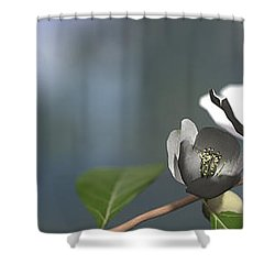 Dogwood Shower Curtain by Cynthia Decker