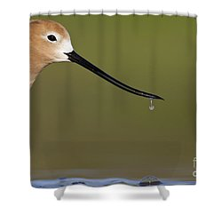 Drippy Shower Curtain