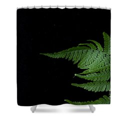 Shower Curtain featuring the photograph Fern II by Alana Ranney