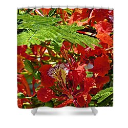 Shower Curtain featuring the photograph Flamboyan by Lilliana Mendez