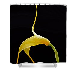 Floral Dancer Shower Curtain