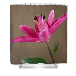 Shower Curtain featuring the photograph For You by Arlene Carmel