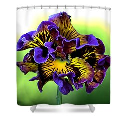 Frilly Pansy Shower Curtain by Joy Watson