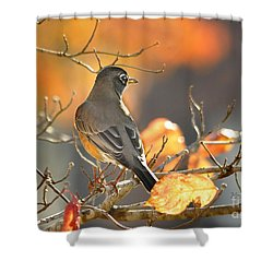 Shower Curtain featuring the photograph Glowing Robin by Nava Thompson