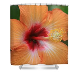 Gods Garden Shower Curtain by Sharon Mau