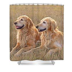 Golden Retrievers In Golden Field Shower Curtain