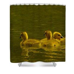 Goslings Shower Curtain by Jeff Swan