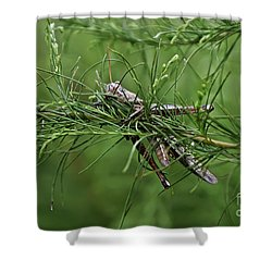 Shower Curtain featuring the photograph Grasshopper by Olga Hamilton