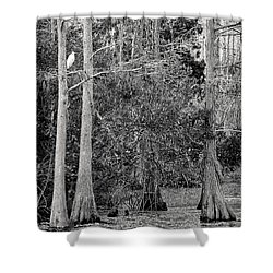 Grassy Waters Shower Curtain by Bruce Bain