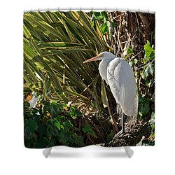 Shower Curtain featuring the photograph Great Egret by Kate Brown