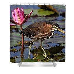 Green Heron Photo Shower Curtain