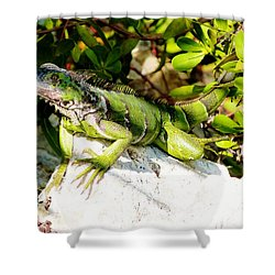 Shower Curtain featuring the photograph Green Iguana by Amar Sheow