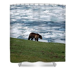 Shower Curtain featuring the photograph Grizzly Bear On Frozen Lake Yellowstone by Shawn O'Brien