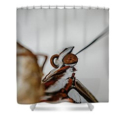 Here's Looking At You Shower Curtain by TK Goforth