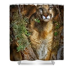 Hiding Shower Curtain