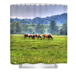 Horses In A Field Shower Curtain by Jonny D