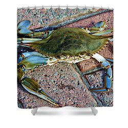 Shower Curtain featuring the photograph Hudson River Crab by Lilliana Mendez