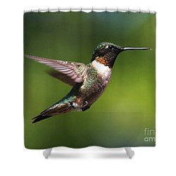 Hummer In Flight Shower Curtain by Douglas Stucky