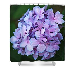 Hydrangea Shower Curtain by Rona Black