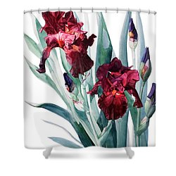 Iris Donatello Shower Curtain by Greta Corens