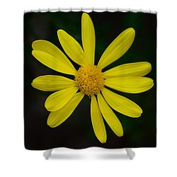 Isolated Daisy Shower Curtain by Debra Martz