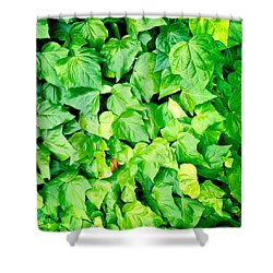 Ivy Shower Curtain by Les Cunliffe