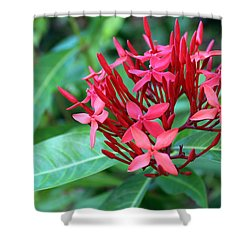 Jamaican Red Shower Curtain