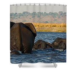 Shower Curtain featuring the photograph Kalahari Elephants Crossing Chobe River by Amanda Stadther