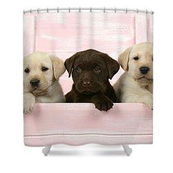 Labrador Retriever Puppies Shower Curtain by John Daniels