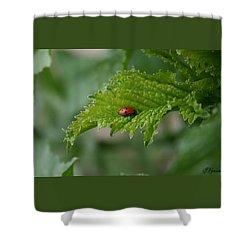 Ladybug Shower Curtain by Ellen Henneke