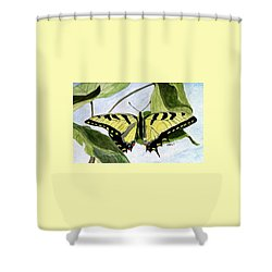 Shower Curtain featuring the painting Male Eastern Tiger Swallowtail by Angela Davies