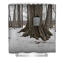 Maple Sugaring Shower Curtain