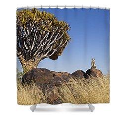Meerkat In Quiver Tree Grassland Shower Curtain