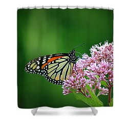 Monarch In Light  Shower Curtain