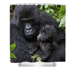 Mountain Gorilla And Infant Shower Curtain by Suzi Eszterhas