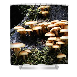 Shower Curtain featuring the photograph Mushrooms On A Stump by Chalet Roome-Rigdon