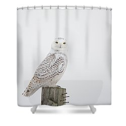 Observant Shower Curtain by Cheryl Baxter