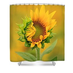 Opening Sunflower Shower Curtain