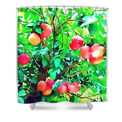 Orange Trees With Fruits On Plantation Shower Curtain by Lanjee Chee