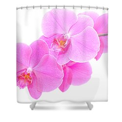 Orchid Isolated Shower Curtain by Michal Bednarek