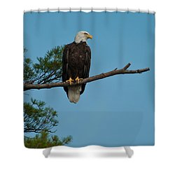 Shower Curtain featuring the photograph Out On A Limb by Brenda Jacobs