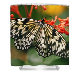 Paper Kite Butterfly Shower Curtain by Cindi Ressler