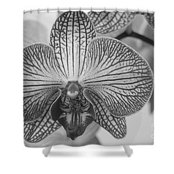 Phalaenopsis Orchid Shower Curtain