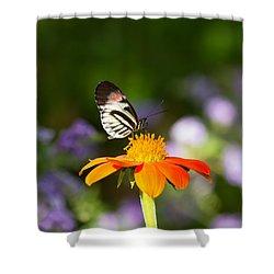 Piano Key Butterfly Shower Curtain by Kim Hojnacki