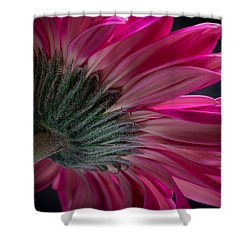 Shower Curtain featuring the photograph Pink Flower by Edgar Laureano