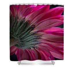 Pink Flower Shower Curtain by Edgar Laureano