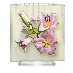 Pink Lilies On Cream Shower Curtain by Jane McIlroy